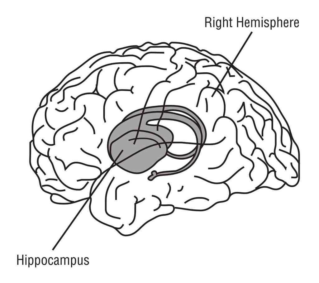 """във връзка със статия """"как да произвеждате повече мозъчни клетки"""" мозък хипоталамус"""