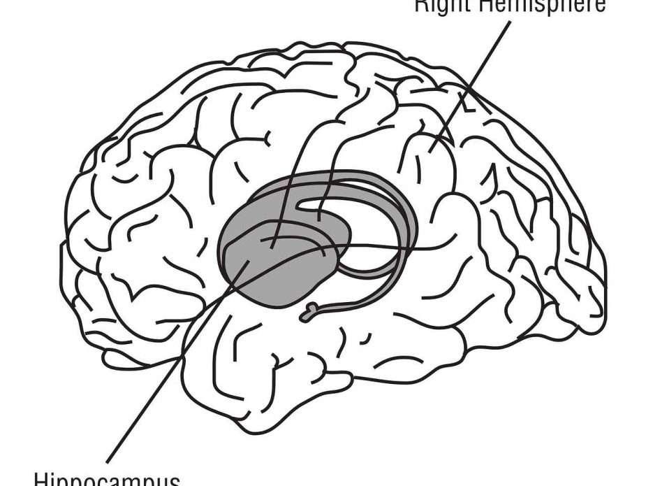 мозък хипоталамус