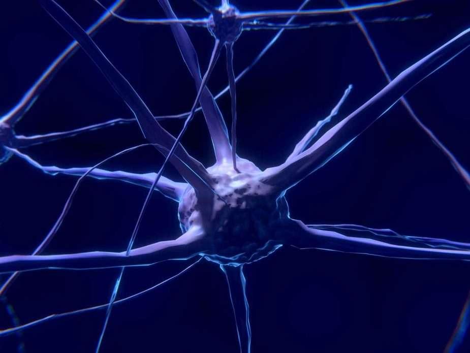 мозъчна клетка неврон