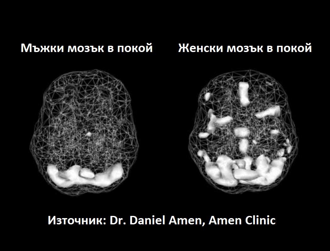 мъжки и женски мозък